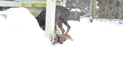 MOnkey and Red's First Snow
